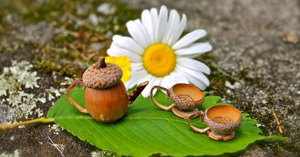 Cutest idea ever! Make a fairy tea set out of acorns. See