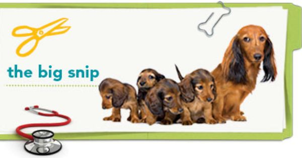 The Health And Behavior Benefits Of Spaying Or Neutering Your Pets Pet Health Health Tips Health