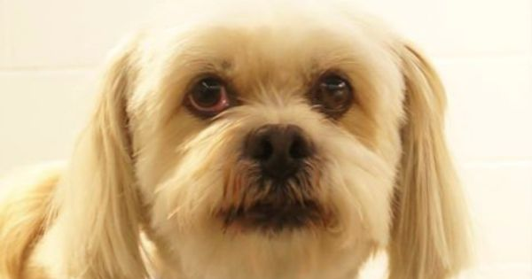... Apso | FCL Photo Gallery | Pinterest | Jack o'connell, Lhasa apso and