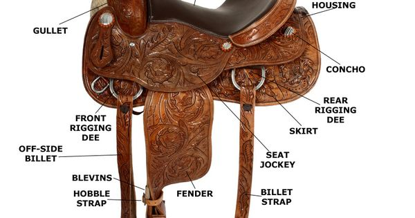 the different parts of a horse saddle Browse our selection of saddle accessories for everything you may need for example, a wide range of gullet bars or plates allows you to adjust the width of your compatible saddle as needed for different horses or as musculature changes.
