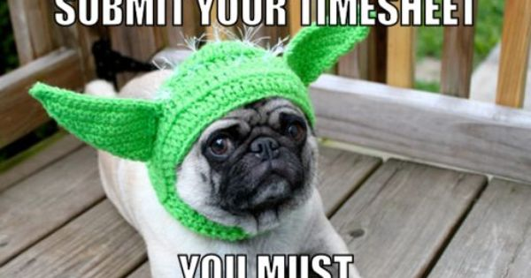 Timesheet Memes, Birthdays, Cat Memes | My favorite words ...