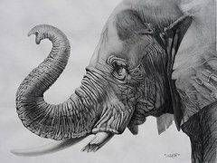 Como Dibujar Trompas U Hocicos Arte De Elefante Pintura De Elefante Dibujos De Animales