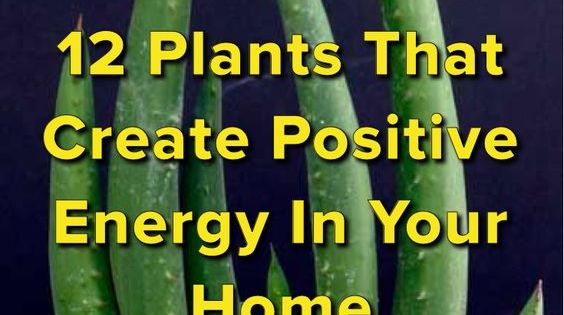 12 home plants for positive vibes creating positive Positive energy at home