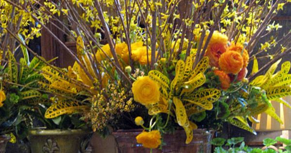 Anduze Style Urn Filled With Forsythia Ranunculus