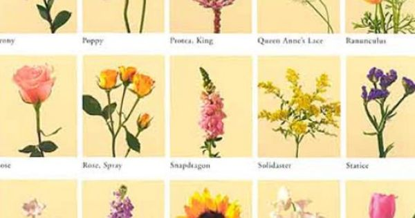 Irish Flowers and Their Meanings | Pics of flowers and their meanings pictures 3 | Flower Power ...