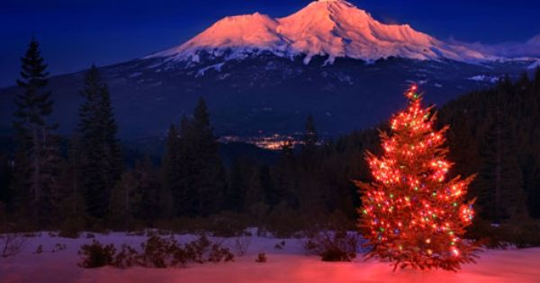 Shasta Christmas Tree By Cindyd Shasta Mount Shasta National Parks
