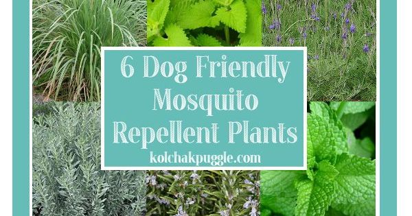 how to keep mosquitos away from ng dog