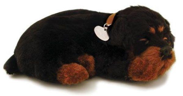 Perfect Petzzz Rottweiler Rottweiler Pet Allergies Dog Lovers