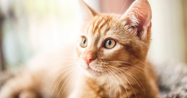 Pet Photography Denver Cat Photography Denver Professional Pet Photographers Tap The Link F Cat Photography Animal Photography Professional Pet Photography