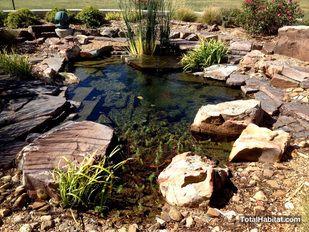 Small Natural Swimming Pool Pond Natural Swimming Ponds Small Water Gardens Swimming Pool Pond