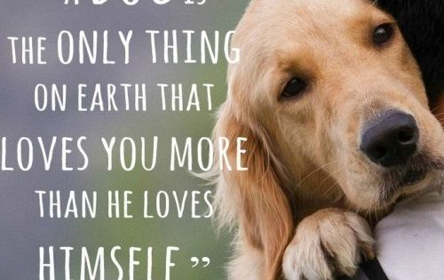 A Dog love quotes life quotes quotes animals quote dogs life quote pets family quotes