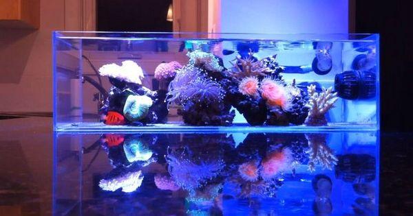 Minimalistic nano reef aquarium reef aquariums for Aquarium recifal nano