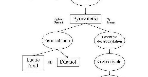 A Comparison of Photosynthesis and Cellular Respiration ...