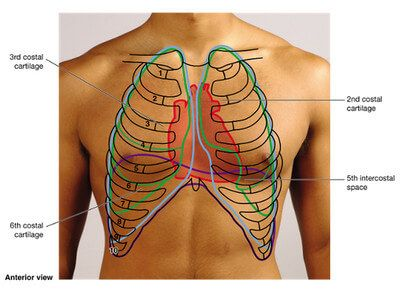 anterior-view-of-chest-wall-picture (400×298) | medicine, Human Body