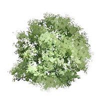 Garden Design Software For Creating Garden Design Plans Trees Top View Tree Photoshop Garden Design Software