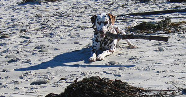 Beaches In Laguna Beach That Allow Dogs