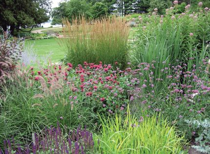 ornamental perennials essay From this branch, emerged four groups of land plants, including the mosses, the  ferns, the conifers, and the flowering plants these four groups.