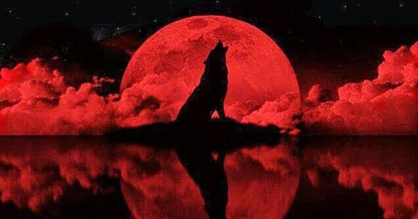 She Wolf Night: Blood ...