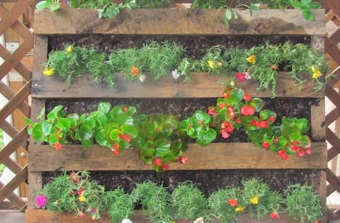 More pallet gardening ideas...