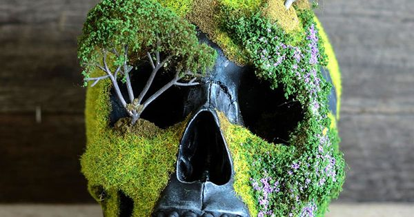 These unique bonsai skulls are fascinating and creepy for Unusual bonsai creations