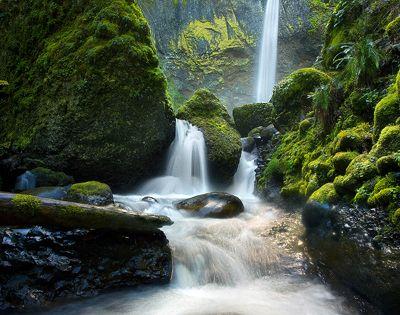 Oregon's rainforest & the suns Luminence are gorgeous ...