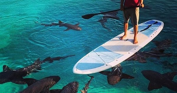 Paddle boarding with a few welcome guests | Photo by Tony Trajkovich
