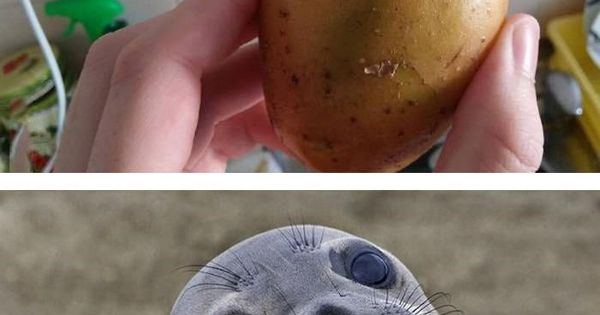 3 Potato Seal Jokes Pinterest Memes Funny Stuff And