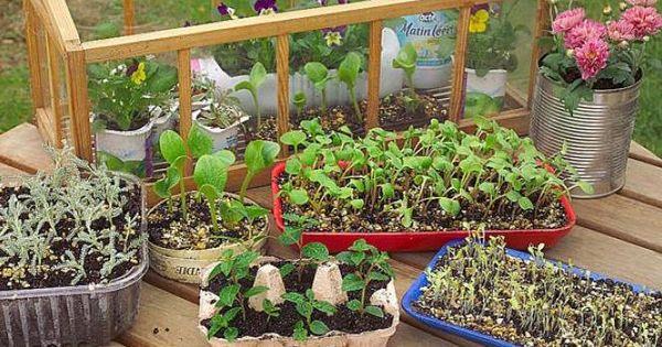 fabriquer un mat riel de semis avec de la r cup ration permaculture gardens and horticulture. Black Bedroom Furniture Sets. Home Design Ideas