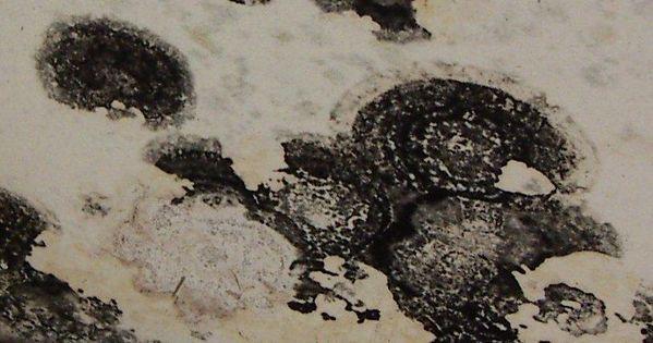 Toxic Black Mold Pattern Fungus Pinterest Them The