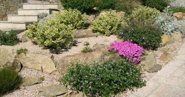 Plantas para rocallas plantas pinterest - Plantas para rocallas ...