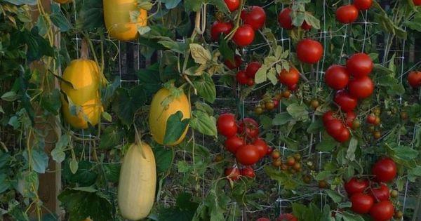 20 vertical vegetable garden ideas jardinage jardins et potager. Black Bedroom Furniture Sets. Home Design Ideas