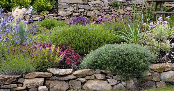 Un jardin breton d agapanthes et d hortensias bleus du for Le jardin breton