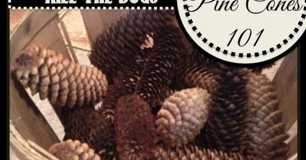 how to clean pine cones sap