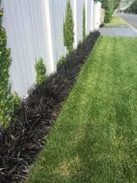 Image Result For Mondo Grass Edging Grass Edging Mondo Grass Grass