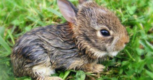 Baby Bunny Rabbit Bunnies Pinterest Baby Bunnies