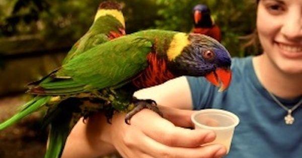 Top Jobs For Animal Lovers Inside Jobs Jobs With Animals Work With Animals Animal Lover