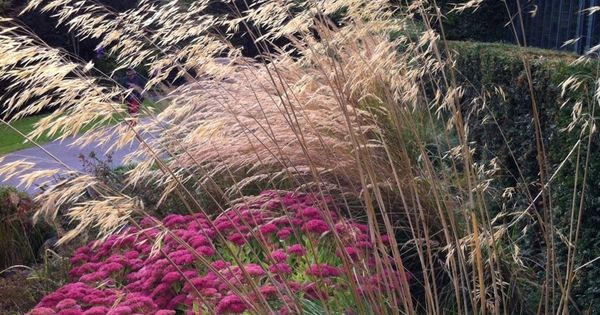 Sedum autumn joy calamagrostis and stipa plant for Planting schemes with grasses