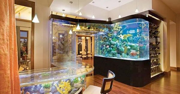 Fish Tanks Fish And Aquarium On Pinterest