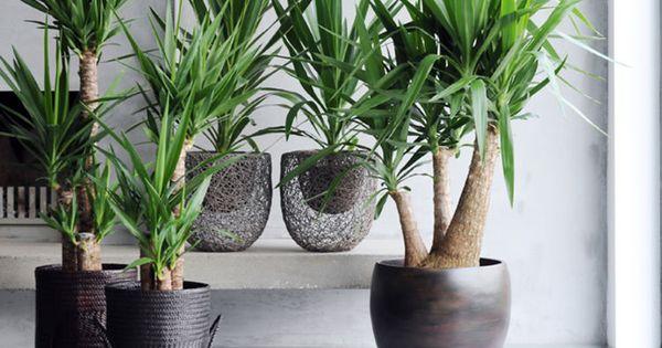 quelle plante pour quelle pi ce interieur. Black Bedroom Furniture Sets. Home Design Ideas