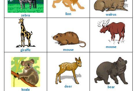 Mammals Chart www.lovi...