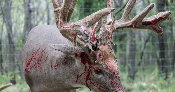 Dead Bucks Sheds