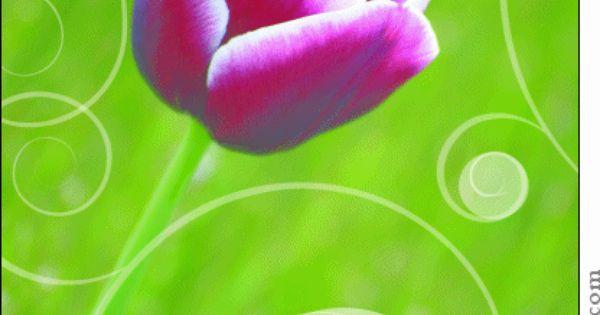Carte bisous avec une jolie fleur pour envoyer par la for Envoyer fleurs par internet