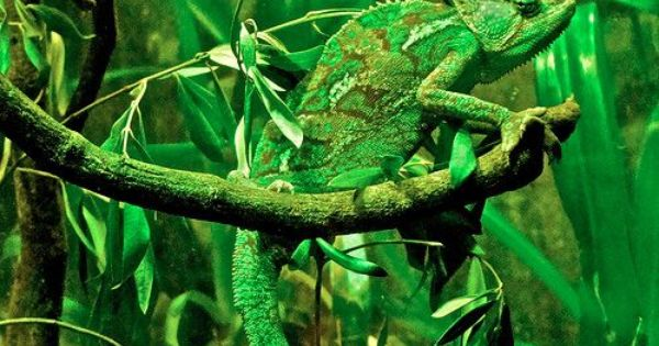 Masters of Nature Camouflage - lizard | Natures camouflage ...