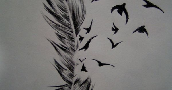 Bird feathers feathers and birds on pinterest