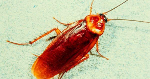 Ahhhhomgomgomgno Cockroach Control Cockroaches Pest Management