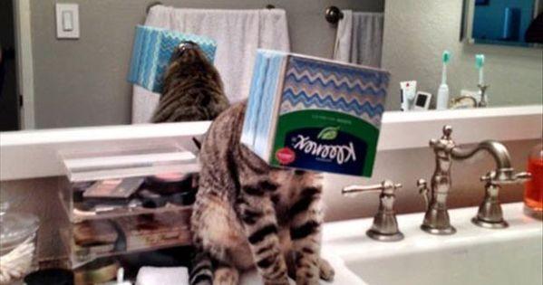 funny animals - cat his head stuck in a kleenex box