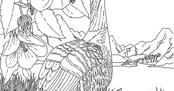 hawaiian goose coloring pages - photo#11