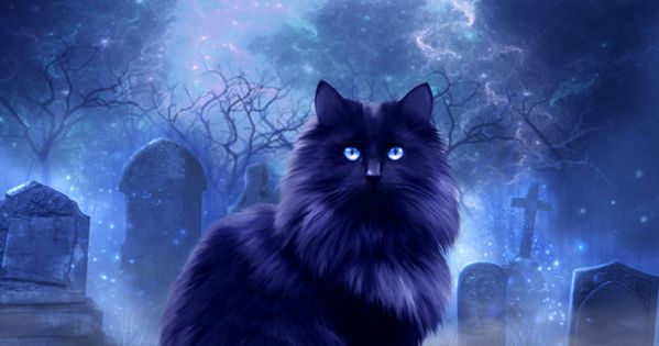 blue moon/ black cat