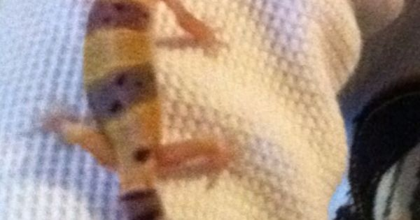 Leopard GeckoGreat pet to have. Fun to watch and easy to