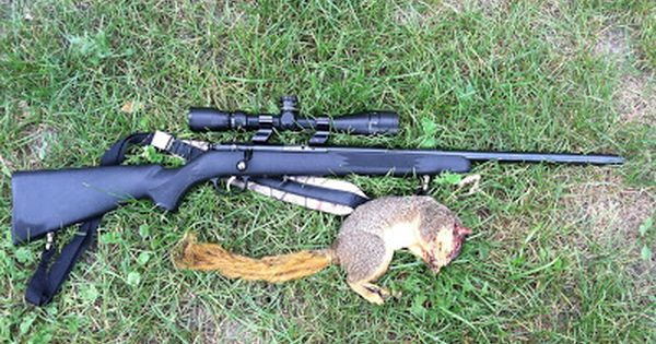 The Urban Sportsman: Quick Tips for Better Squirrel Hunting